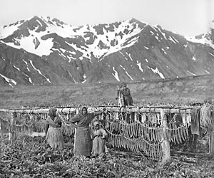 Aleuts dry fish on drying racks on Attu Island.W.I. Jochelson, 1909MAE