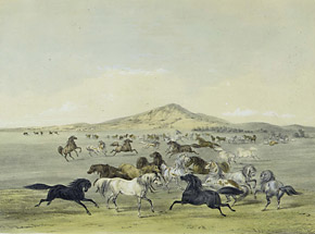 Chevaux sauvagesGeorge CatlinNorth American Indian Portfolio. Hunting Scenes and Amusements of the Rocky Mountains and Prairies of America. New York, 1845Yale Collection of Western Americana, Beinecke Rare Book and Manuscript Library