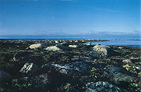 Landscape photograph of the Hudson Bay Lowlands in simmer, Arviat, 1986.