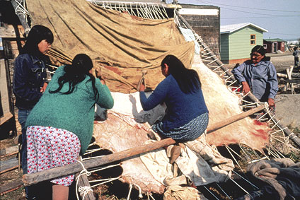 Women scraping a moosehide in Ndilo (Rainbow Valley, Yellowknife)